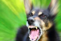 Dog Aggression Training