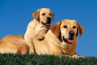 Adult Dog Obedience Training Maryland