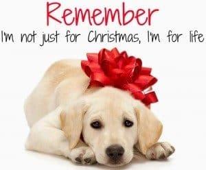 Do not buy a puppy for Christmas