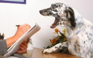 Dog behavior training Maryland