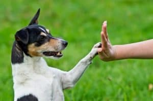 Dog training experts Silver Spring Maryland