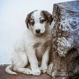 Shy or fearful puppy - puppy training Silver Spring Maryland
