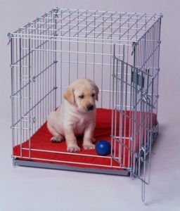 puppy training - crate training