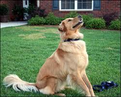 Home Dog Training Silver Spring Rockville Maryland