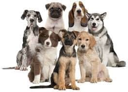choosing the right dog for your family - Silver Spring Dog training Maryland