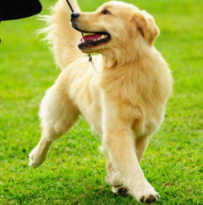 Positive reinforcement - Leash walk dog training - Bethesda Maryland
