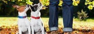 Dog behavior consultant - Silver Spring, Bethesda, Rockville Maryland