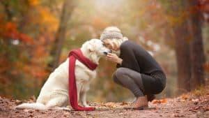 Dog emotions can affect dog behavior