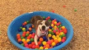 Dog enrichment affects your dogs behavior