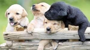 Puppy socialization camp - Pawz for health dog training