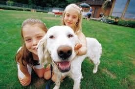 Kids and Dogs safety around dogs