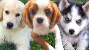 Puppy boarding and socialization program - Maryland
