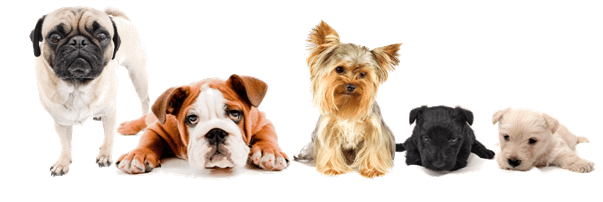 How to train your puppy - puppy training Maryland