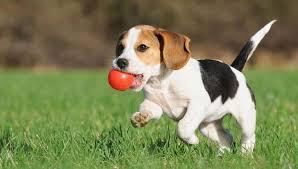 Silver Spring puppy training Maryland