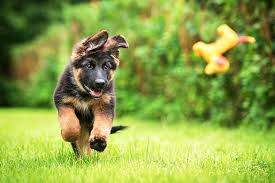 Dog training come when called - Bethesda Maryland